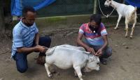 البقرة راني