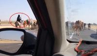 فيديو يثير الضجة  لراعيات مواشي في مصر